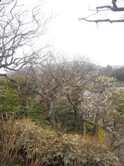02) 雪の日、鎌倉「東慶寺」梅の頃。11.02.12