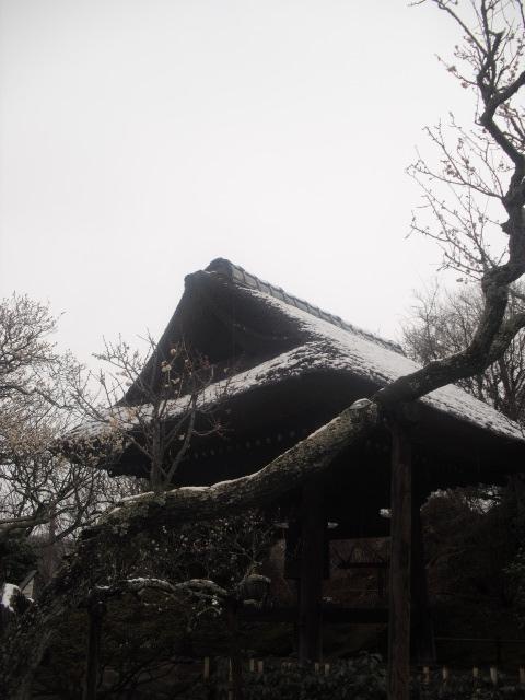 07) 雪の日、鎌倉「東慶寺」梅の頃。11.02.12
