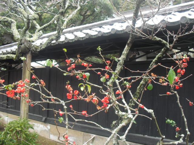 09) 雪の日、鎌倉「東慶寺」梅の頃。11.02.12