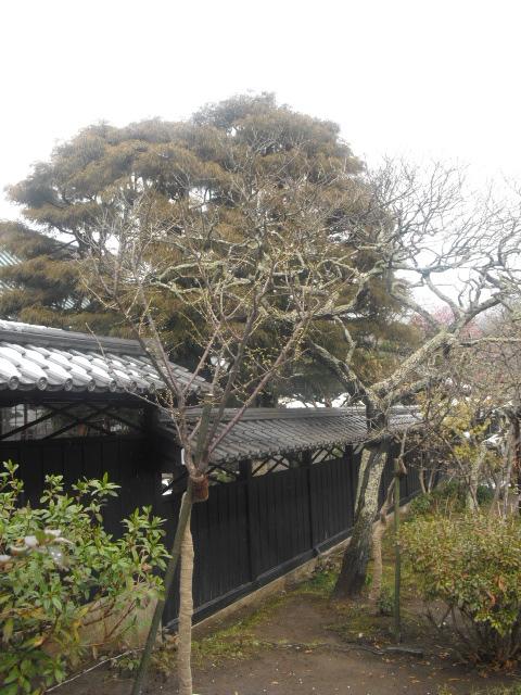 10) 雪の日、鎌倉「東慶寺」梅の頃。11.02.12