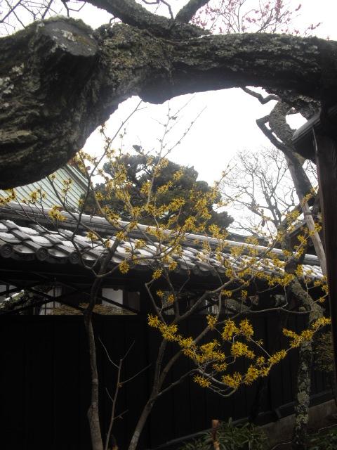 16) 雪の日、鎌倉「東慶寺」梅の頃。11.02.12