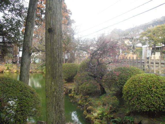 02) 円覚寺参道「白鷺池(びゃくろち)」の梅。