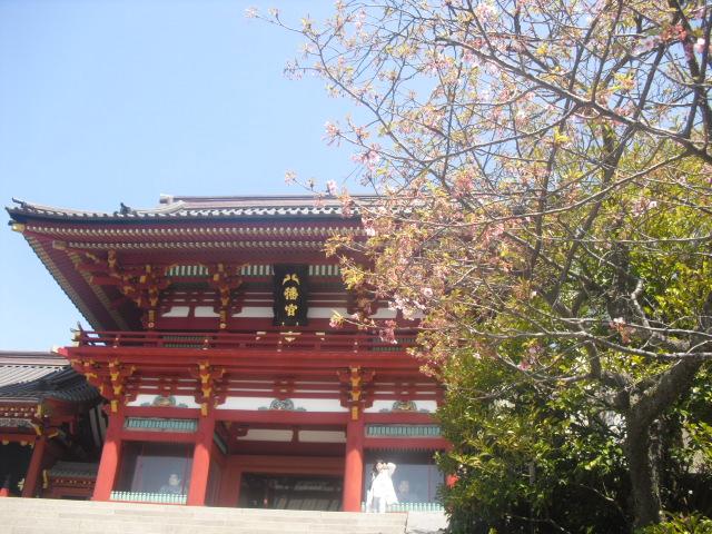 12) 石段横の桜