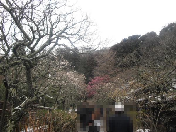 12) 雪の日、鎌倉「東慶寺」梅の頃。11.02.12