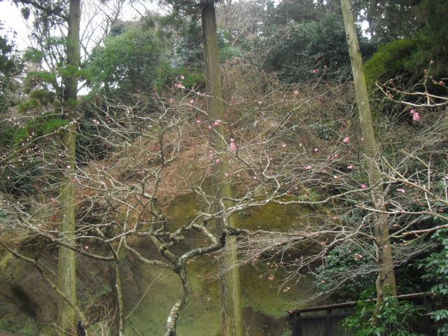 19) 雪の日、鎌倉「東慶寺」梅の頃。11.02.12