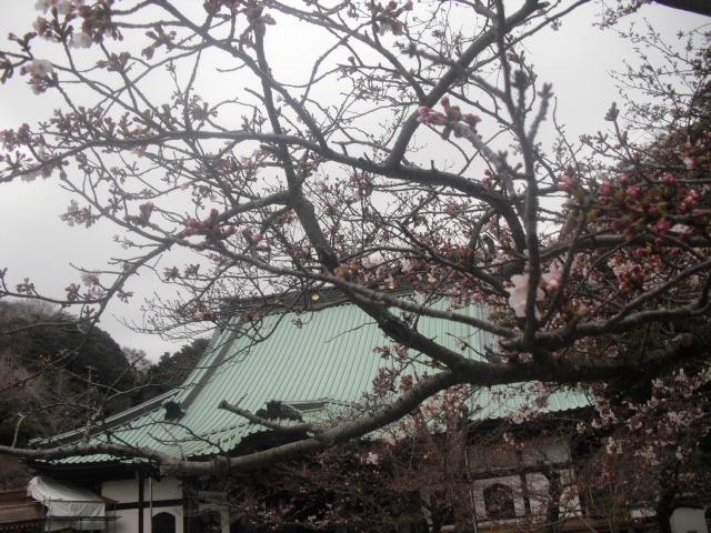 04) 「光明寺」 _ 鎌倉市材木座