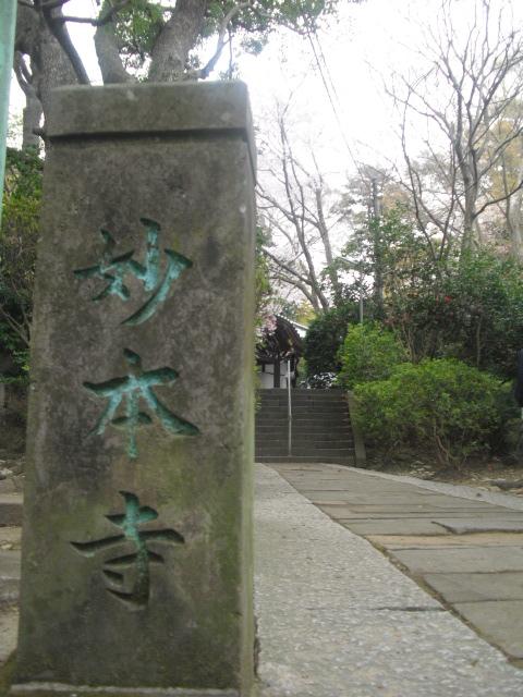01) 謹んで参拝祈願いたしました。鎌倉「妙本寺」桜満開の頃。_  11.04.10