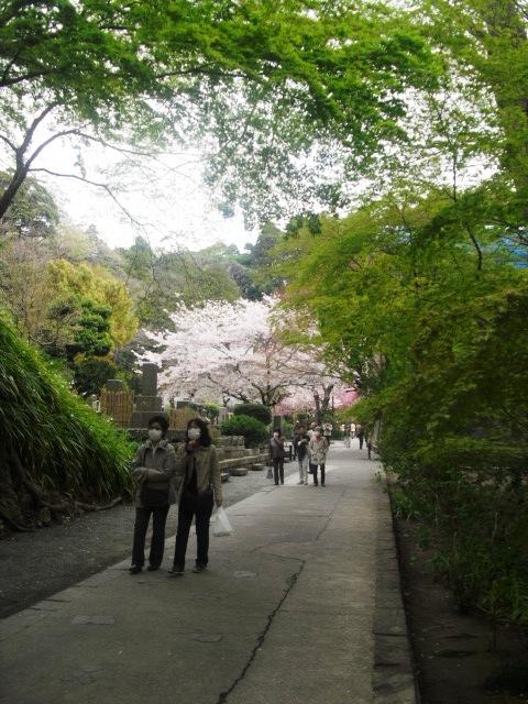 06)  謹んで参拝祈願いたしました。鎌倉「妙本寺」桜満開の頃。_  11.04.10