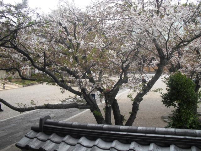06) 境内の桜