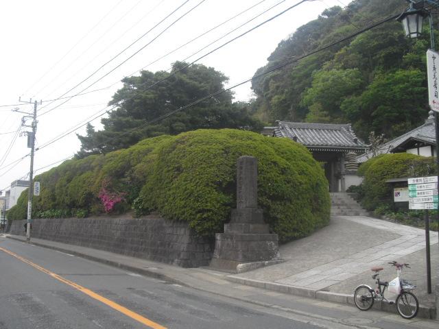 02) 開花を待つツツジの生垣、鎌倉「安養院」。