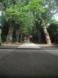 05) 桜の境内参道 _ 山門の外から撮影