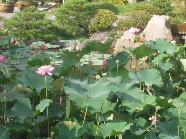 09) 鎌倉「光明寺」