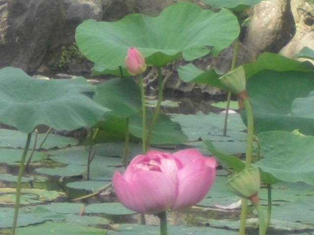11) 鎌倉「光明寺」