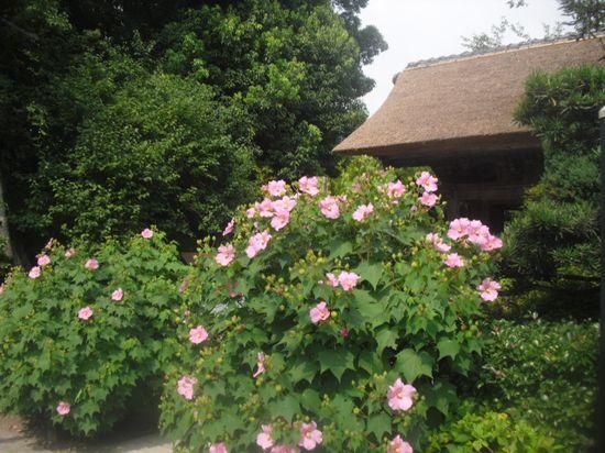 05) 「極楽寺」 山門前の花 _ 09:28am