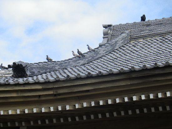 04) 山門の屋根で憩う鳩。