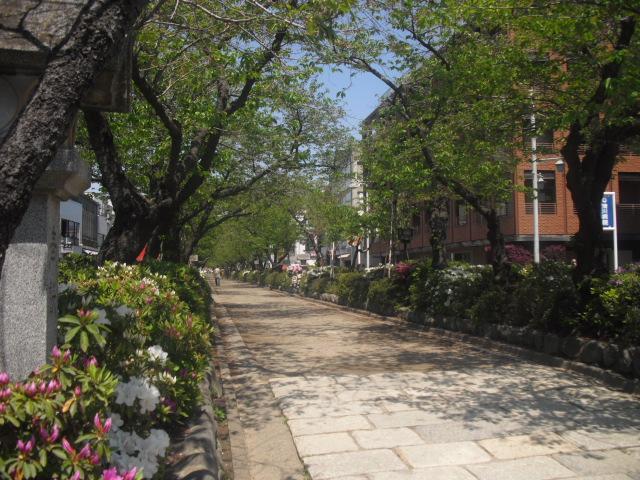 05) 鎌倉「鶴岡八幡宮」 ' 段葛 '、ツツジの頃。_11.04.25