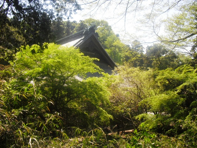 06) 鎌倉「妙本寺」、シャガの花咲く頃。