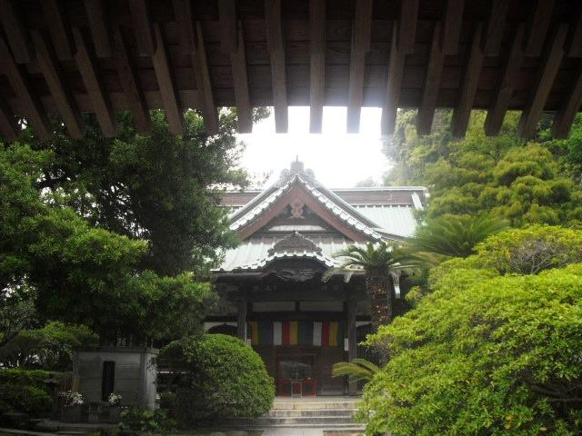 04) 開花を待つツツジの生垣、鎌倉「安養院」。