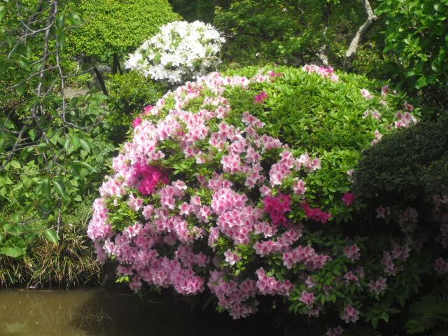 07) 鎌倉「光明寺」記主庭園にツツジ咲く頃 _ 11.05.02