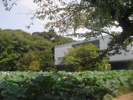 """11) 鎌倉「鶴岡八幡宮」、"""" 源平池 """" の 平家池側。_ 11.08.16"""