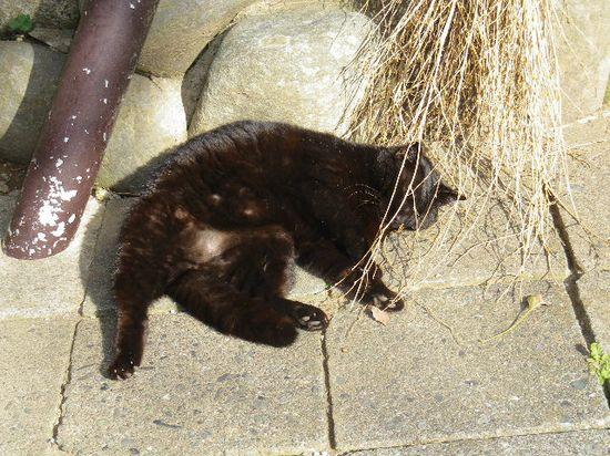 34) 「葛原岡神社」寺務所前で撮った猫
