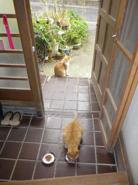 01) 11.10.01朝の 'ミミ' & 'キキ'