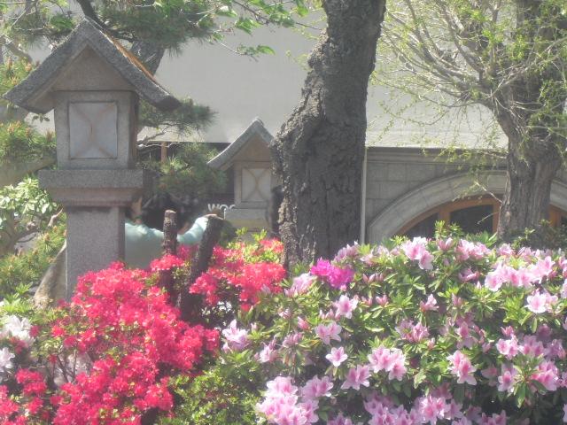 03) 鎌倉「鶴岡八幡宮」 ' 段葛 '、ツツジの頃。_11.04.25