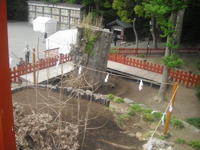 05) 倒壊後の大銀杏 _  「鶴岡八幡宮」