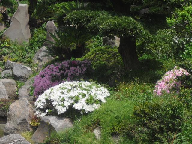 08) 鎌倉「光明寺」記主庭園にツツジ咲く頃 _ 11.05.02