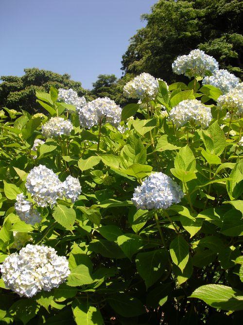 07) 鎌倉「成就院」_10.06.03