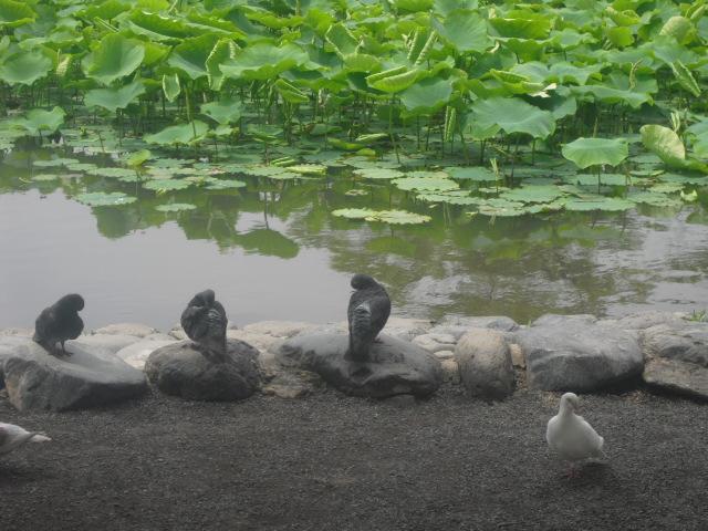 02) 梅雨時の源平池、鎌倉「鶴岡八幡宮」。