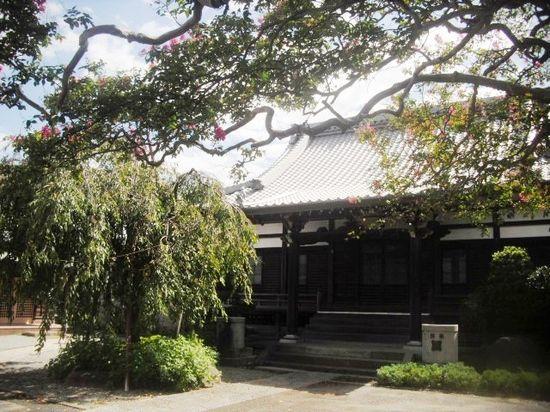 02) 左は枝垂れ桜。 右が、百日紅の老木。