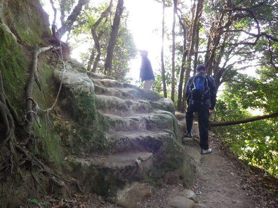 19) 「大仏ハイキングコース」の平坦な尾根道へ辿り着くまでの、急な坂道を進行中。 _ 9:39am頃