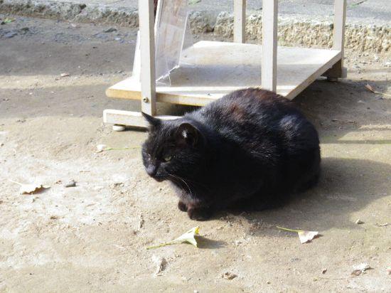 35) 飼い猫状態の様子だった
