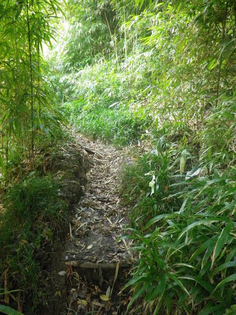 03) 写真 02) から更に先へ、踏み固められた道が続いていた。古道とか、ハイキング・コース入口なのか?