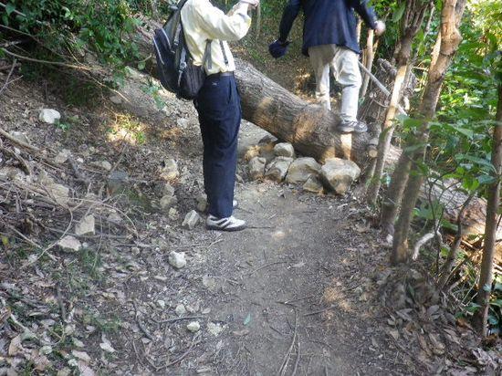 06) 倒れた大木が道を塞いでいた。倒れた先の右崖下は住宅地民家スレスレ。怖っ! _ 10:00am頃