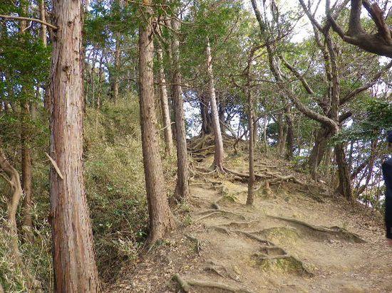 21) 「大仏ハイキングコース」の平坦な尾根道から、更に上り坂を進行中 _ 9:46am頃