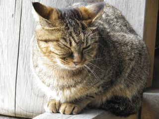 10-03) 「光明寺」山門に居た猫