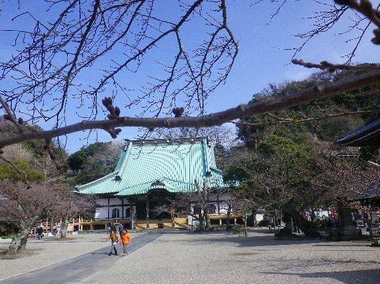 02) 桜の蕾を撮ったつもり