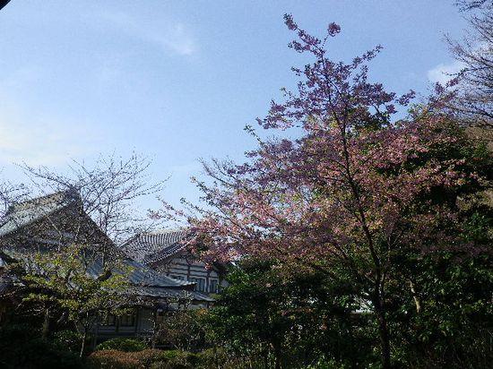 03) ソメイヨシノではなくて、緋寒桜か? を撮ったつもりだけど ピンク色さえ写っていない。