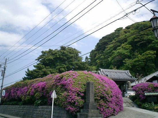 01)鎌倉市大町「安養院」道路から観る。9:50am頃。