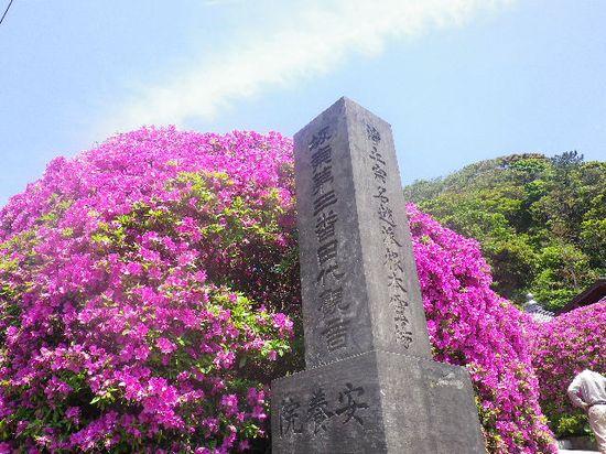 02) 12.05.13鎌倉「安養院」、ツツジ満開の頃。