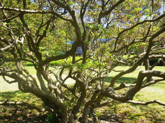 3-02)-4 ツツジ老大木の中から、建物方向を見る。
