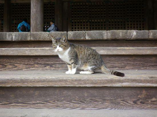 02) 鎌倉「妙本寺」祖師堂の階段で、高名な!' 猫住職 ' さまに挨拶。