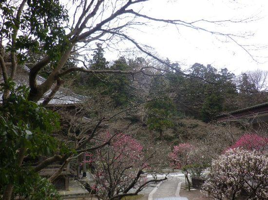 04) 祖師堂周辺の梅