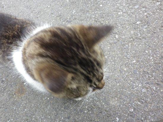 01) 私がチャリンコを止めたら、道路で しゃがんでいた ' タロー ' 君が近寄ってきた、