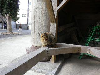 10-02) 「光明寺」山門に居た猫