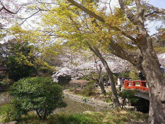 07)  源平池 の ' 平家池 ' の桜。