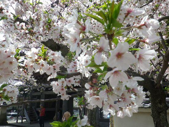03) 来年も 再来年も その先も、このマンネリ・ワンパターン写真が撮れますよう私の健康と日本の安寧を祈る。