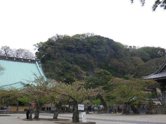 06) 葉桜になったソメイヨシノ